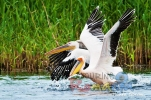 danube delta romania photo source iliuta goean fotonatura ro 4