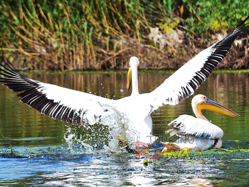 DANUBE DELTA - UNESCO NATURAL SITE