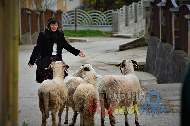 People from Maramures Transylvania 15