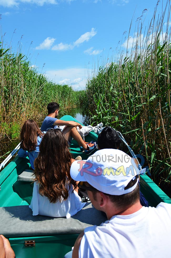Wildlife in Danube Delta Romania