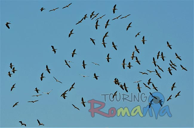Wildlife in Danube Delta Romania 6