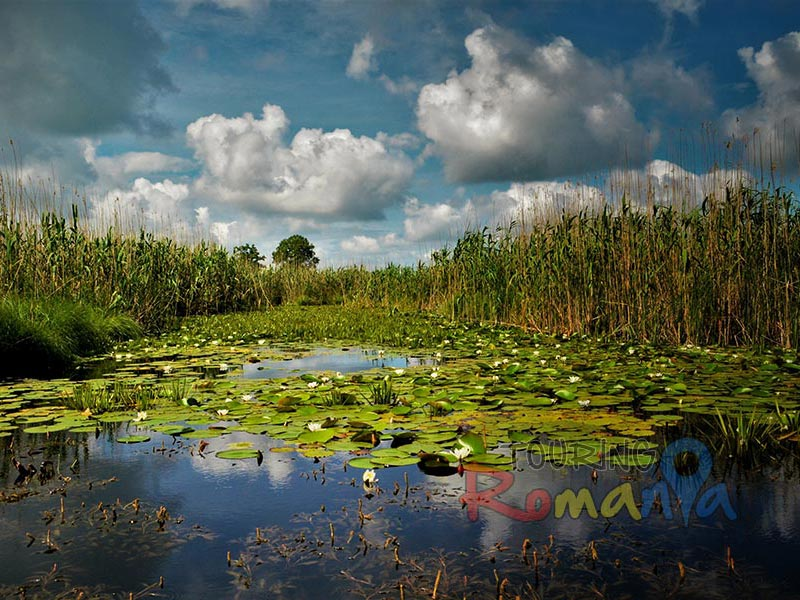 2021 Explore Wildlife from Danube Delta - Private Tour