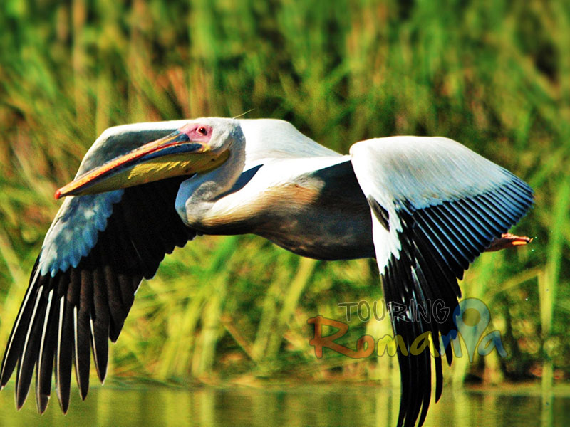 Danube Delta Great Adventure - 9 Days Private Guided Tour