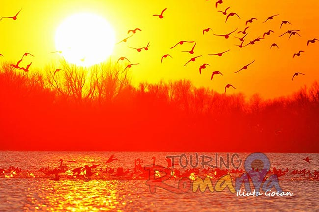 Danube Delta Romania photo source Iliuta Goean fotonatura ro 17