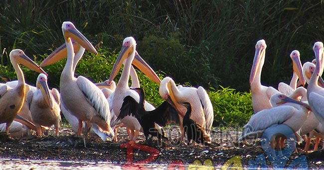 Danube Delta Romania Unesco World Heritage 13