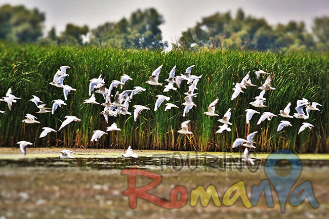 Danube Delta Romania Unesco World Heritage 2