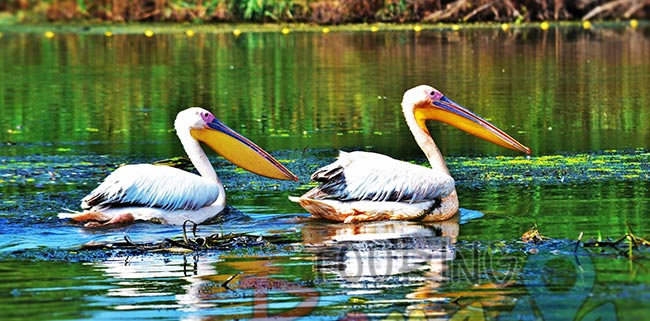 Danube Delta Romania Unesco World Heritage 8
