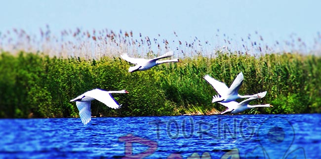 Danube Delta Romania Unesco World Heritage 12