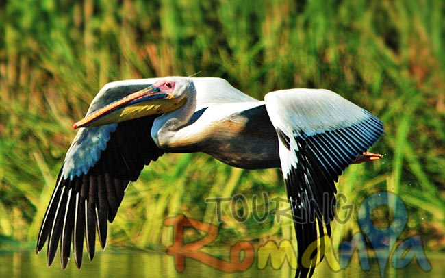 Danube Delta Romania Unesco World Heritage 23