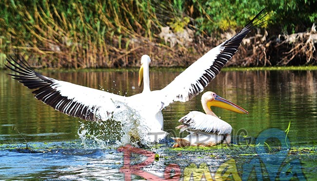 Danube Delta Romania Unesco World Heritage 4