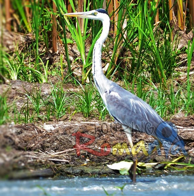 Danube Delta Romania Unesco World Heritage 6