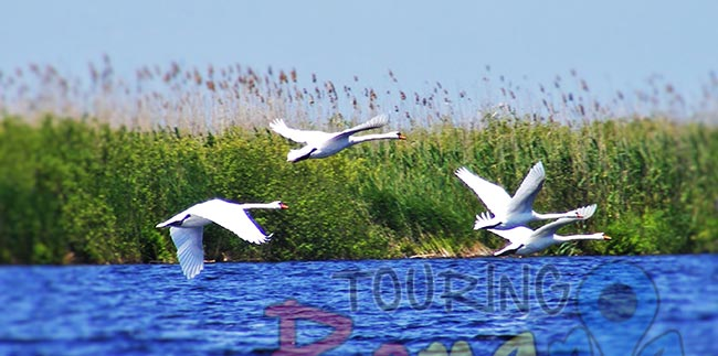 z Danube Delta Romania Unesco World Heritage 12
