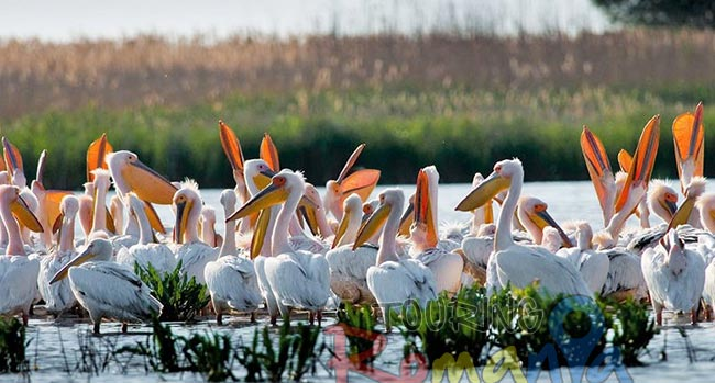 Danube Delta Small Shared Tour 3